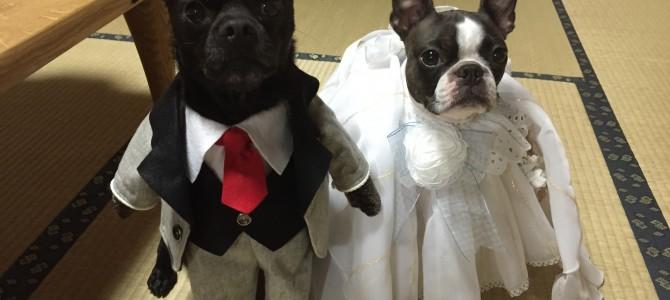 犬用ドレス試着できます!